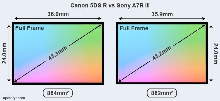 Canon 5DS R and Sony A7R III sensor measures