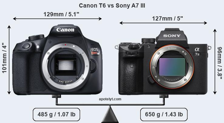 Size Canon T6 vs Sony A7 III