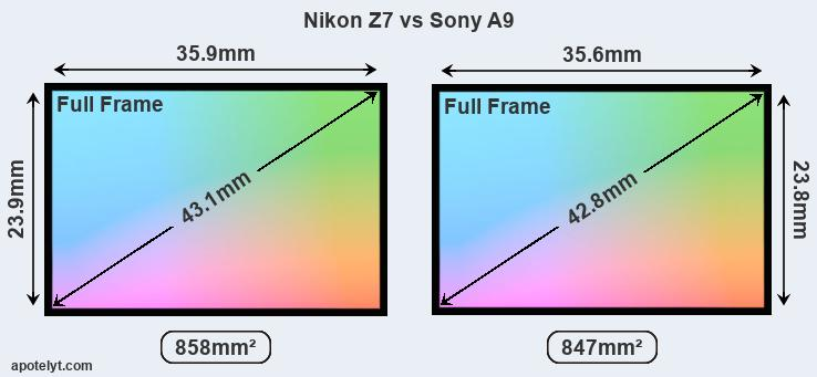 Nikon Z7 And Sony A9 Sensor Measures